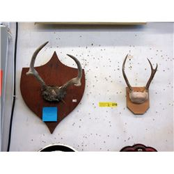 2 Sets of Mounted Mule Deer Antlers