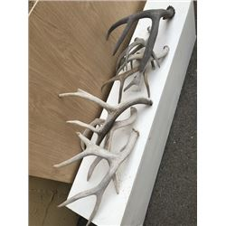 Assorted Wood Antlers