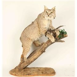 Full Mounted Bobcat