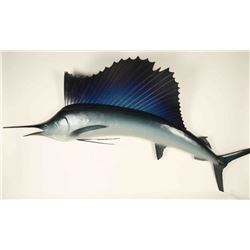 Full Mounted Large Sailfish