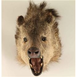Javelina Head Mount
