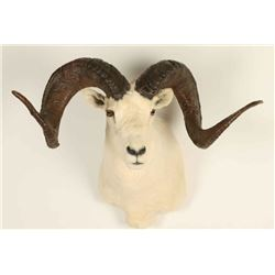 Dahl Sheep Mount