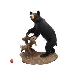 "Black Bear Full Body Trophy Floor Mount. Height 49"";"