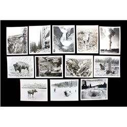 Haynes Yellowstone Park Photograph Collection