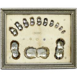 Old Framed Spiney Oyster & Cultured Pearl Display