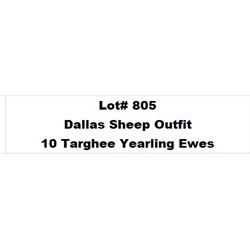 Lot 805 - Dallas Sheep Outfit  - 10 head of Targhee Yearling Ewes