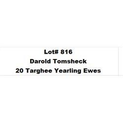 Lot 816 - Tomsheck D & L Inc  - 20 head of Targhee Yearling Ewes