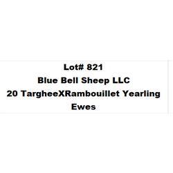 Lot 821 - Blue Bell Sheep LLC  - 20 head of Targhee X Rambouillet Yearling Ewes