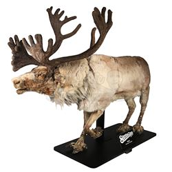 SANTA CLAUS: THE MOVIE (1985) - Full-Size Animatronic Donner Reindeer