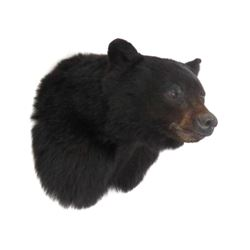 """Black Bear Trophy Head Mount, Signed Parsons '02. Height 15"""""""