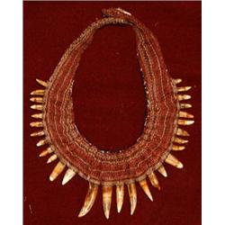 Crocodile tooth necklace mozeypictures Choice Image