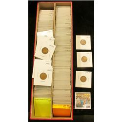 "1586 _ Red 14"" Double Row Stock Box 90% full of carded, ready for Flea Market 1946-50 Wheat Cents."