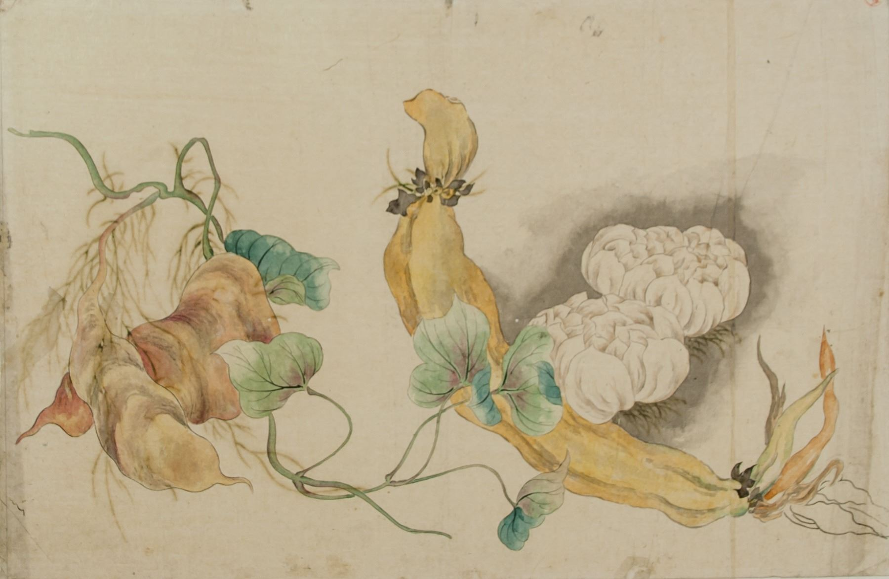 Watercolor On Paper Flowers And Lotus Roots