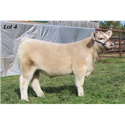 Lot 4 - ECC Steer