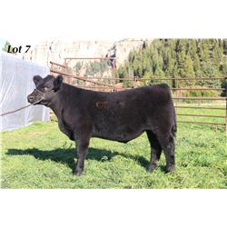 Lot 7 - ECC Steer