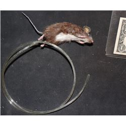 MOUSE PUPPET THAT BREATHES FROM UNKNOWN PRODUCTION
