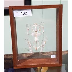 BULLFROG SKELETON IN DISPLAY CASE