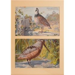 Dupont Smokeless Powder Advertising Quail