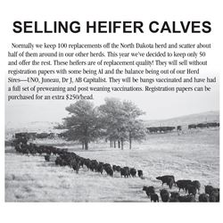 Lot 143 - 10 Heifers