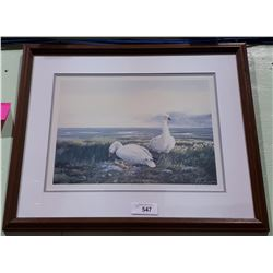 SIGNED LIMITED EDITION CALVERT SNOW GEESE PRINT