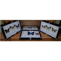 SET OF 12 MOUNTED BUTTERFLIES