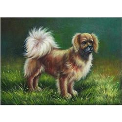 Oil Painting, Tibetan Spaniel Dog