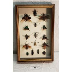 16 Exotic Bugs in Shadow Box