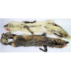 Collection of 2 finely tanned fox pelts