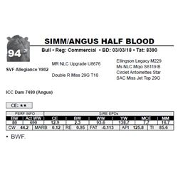 SIMM/ANGUS HALF BLOOD