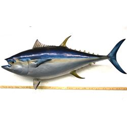 Trophy Atlantic Blue Fin Tuna Mount Over 9 Foot