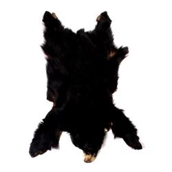 Montana Trophy Black Bear Hide