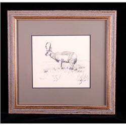 Original Ron Bailey Framed Pronghorn Pencil Sketch