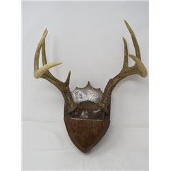 SET OF MOUNTED ANTLERS (SMALL)