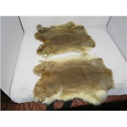 2 RABBIT TANNED PELTS (BROWN)
