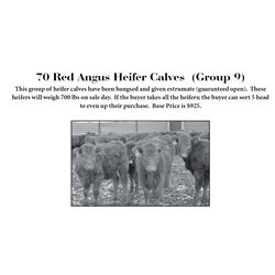 70 Red Angus Heifer Calves