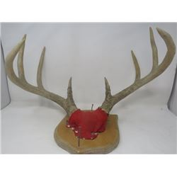 DEER MOUNT (DECORATIVE)