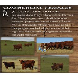 50 THREE YEAR OLD RED ANGUS COWS