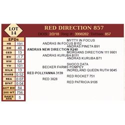 RED DIRECTION 857