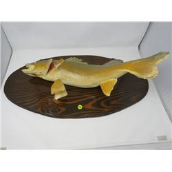 """MOUNTED PICKEREL *27' X 14"""" OVAL*"""