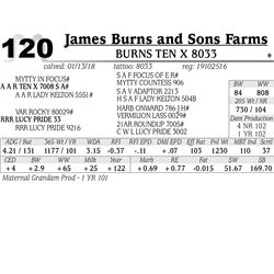 Burns Ten X 8033