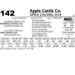APPLE Colonel 0118
