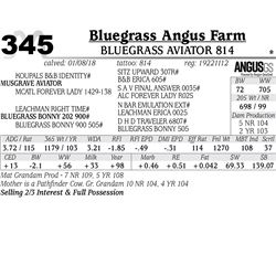 Bluegrass Aviator 814