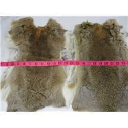 2 JUMBO BROWN RABBIT PELTS