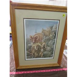 MOUNTAIN SHEEP PRINT (SIGNED) *NUMBERED 1875/3000* (FRAMED)