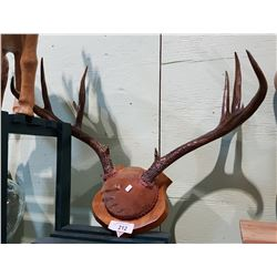 MOUNTED DEER ANTLERS - MOVIE PROP