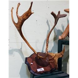 MOUNTED CARIBOO ANTLERS - MOVIE PROP