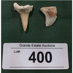 TWO SHARK TOOTH FOSSILS