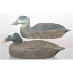 Pair of White wing scoter decoys by Benjamin Schm