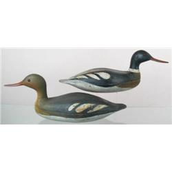 Rare pair of red breasted mergansers ca 1900, fro