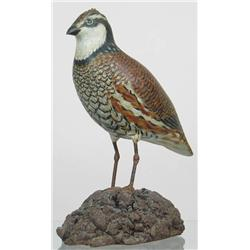 Rare early life sized bob white quail by A. E. C